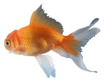 Do fish feel pain like humans for Do fish feel pain